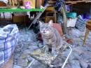 Жила-была кошка по имени Репьяшка... С изумрудно-зелеными глазами...