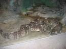 Нашел во дворе ящерицу...))