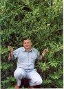 Бамбуковые заросли в Гагре