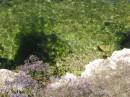 Вода в Херсонесе чудная