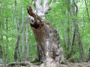 Дерево-слон. Надо же...
