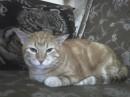 Это мой Кот Потелемон Иванович lll (Пончик)