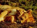 с любимым существом спать сладко...