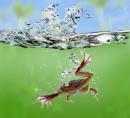 10 10 10 10 10 10 10..........определился новый Чемпион по прыжкам в воду