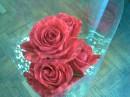 Красивые красные розы... главное что я таких больше не видела-они двухцветные
