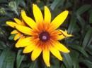 Аленький цветочек!!!