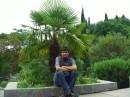 Крым - пальма
